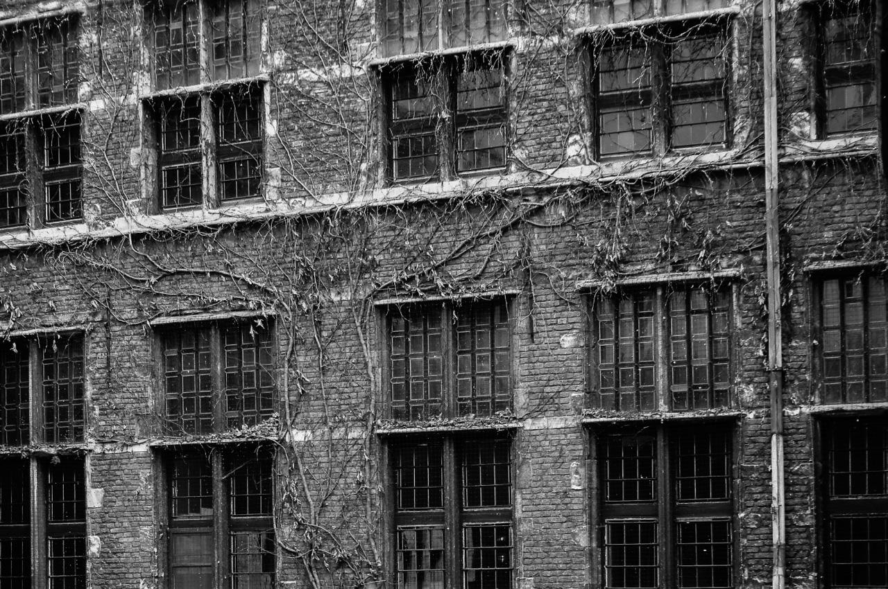 antwerp-windows